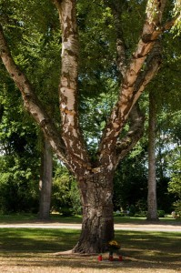 Hinz&Kunzt-Gedenkbaum auf dem Öjendorfer Friedhof