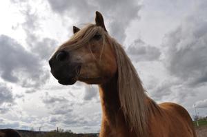 pferd_symbol
