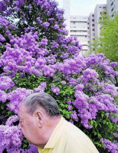 """Ein Moment im Mai: Alfred Redmann aus Berlin, der von seiner Frau betreut und  gepflegt wird, schnuppert an einem Fliederbusch. Michael Hagedorn sagt:  """"Wenn das Kognitive nachlässt, übernehmen die SINNESREIZE das Kommando."""""""