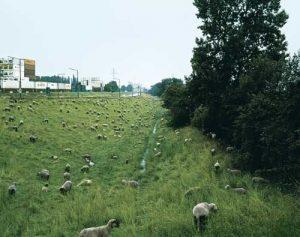 Rechts Schafe, links Container: Wilhelmsburg lebt von  Natur und von Industrie. Groß ist die Angst, dieser raue Charme könnte eines Tages verschwinden.