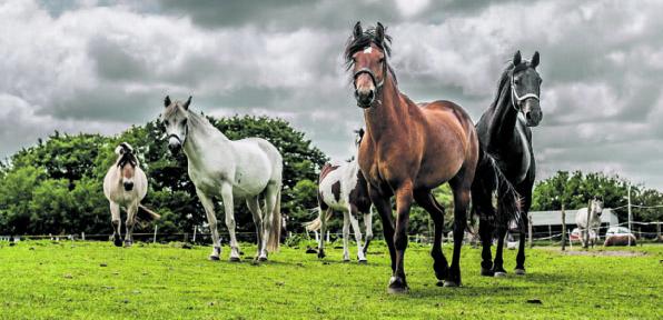 Das ist nicht die Ponderosa,  sondern die Pferdeklappe in Norderbrarup.