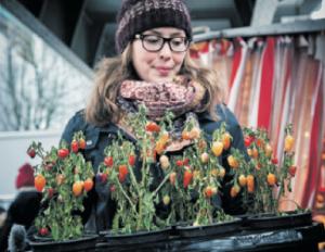 Fette Beute: Diese von Isa Schimpf geretteten CHILIS lassen zwar die Früchte hängen, bringen aber noch Würze ins Essen. Foto: Dmitrij Leltschuk